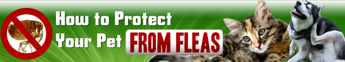 pestbattle Flea Removal means Death to Fleas